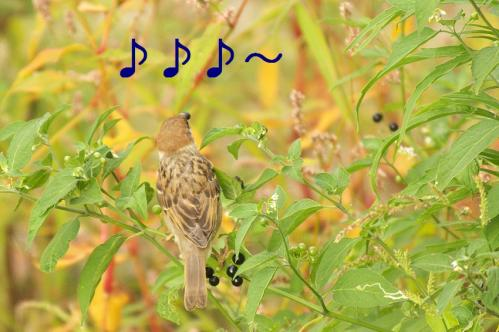 010_20110808211646.jpg
