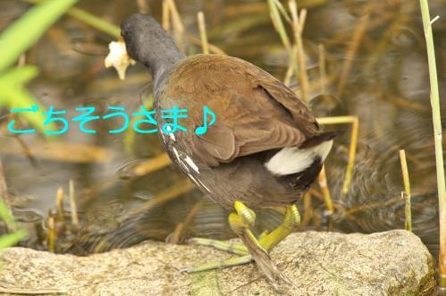 010_20110830214144.jpg