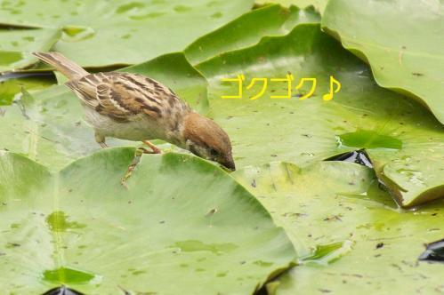 010_20110831213052.jpg