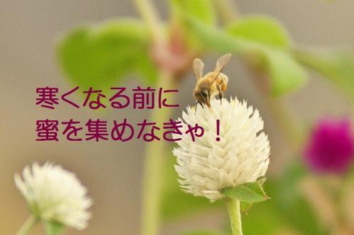 010_20111002232310.jpg