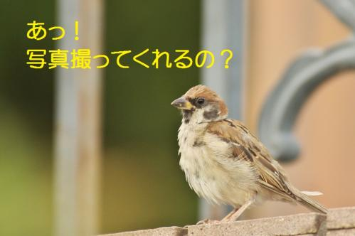 010_20111007221108.jpg