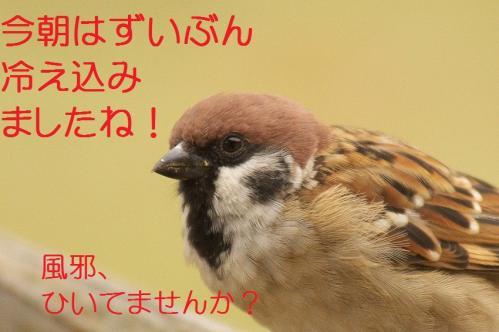 010_20111027194528.jpg