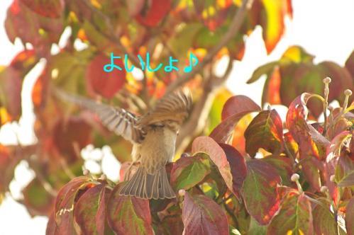 010_20111031213610.jpg