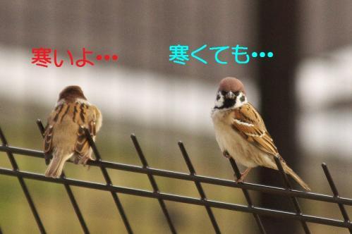 010_20111227205926.jpg