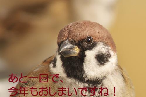 010_20111230192619.jpg