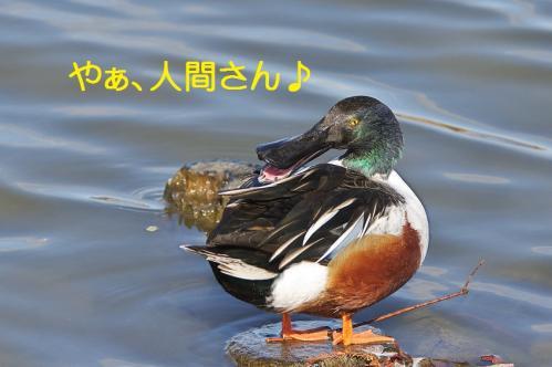 010_20120125231737.jpg