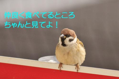 010_20120131202519.jpg