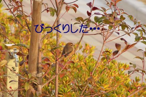 010_20120202222727.jpg