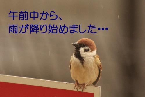 010_20120213220044.jpg