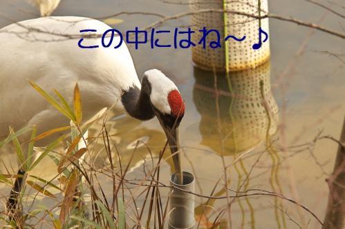 010_20120214222036.jpg
