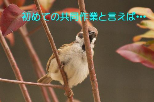 010_20120319224716.jpg
