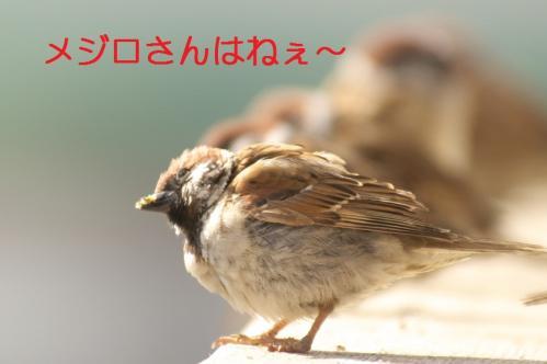 011_20110129213457.jpg