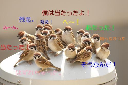 015_20110129213642.jpg