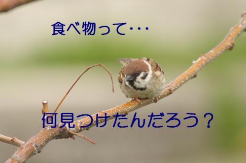 015_20110503173526.jpg