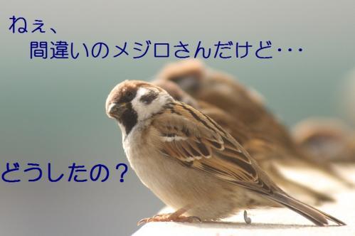 016_20110129213641.jpg