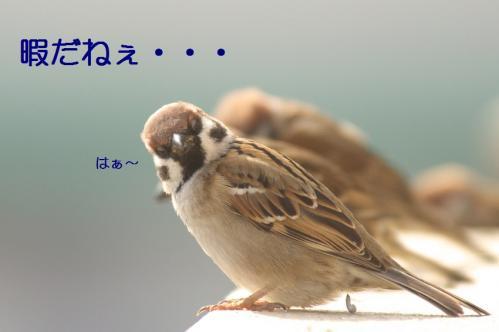 017_20110129213640.jpg