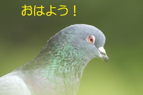 01_20101103223316.jpg