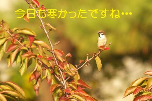 01_20101110222745.jpg