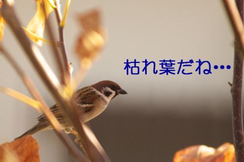 020_20101130191351.jpg