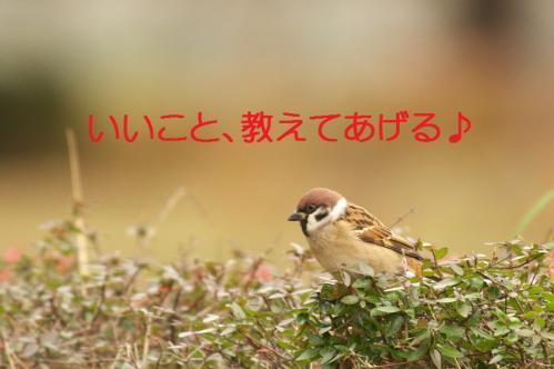 020_20101210214205.jpg