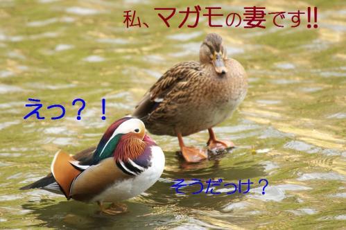 020_20101219200046.jpg