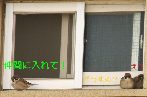 020_20110131211630.jpg