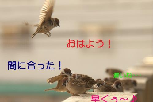 020_20110205220701.jpg