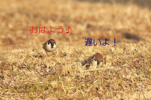 020_20110209221444.jpg