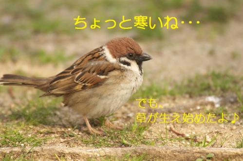020_20110317231617.jpg