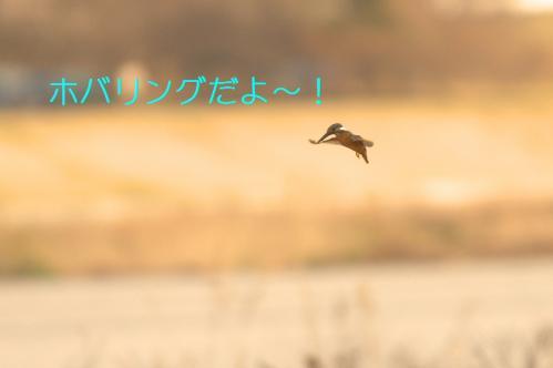 020_20110322002417.jpg