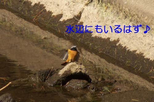 020_20110329231813.jpg