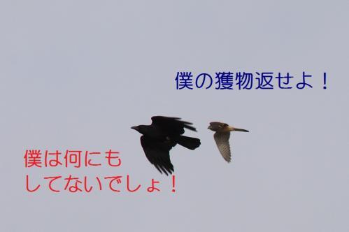020_20110415043113.jpg