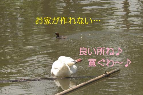 020_20110531202130.jpg