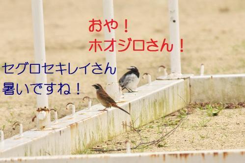 020_20110730220637.jpg