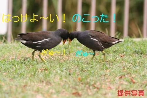 020_20110828211230.jpg