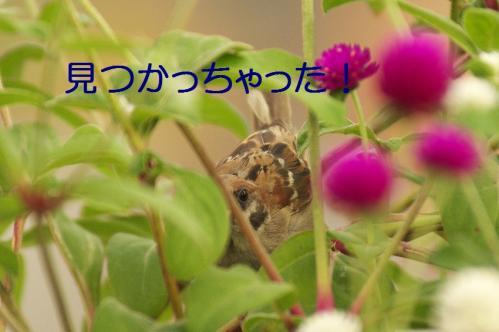 020_20111002232310.jpg