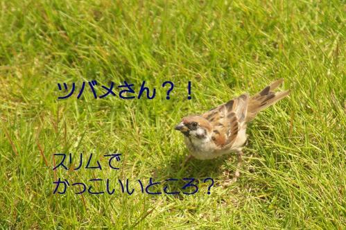 020_20111012232431.jpg