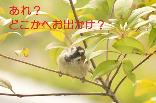 020_20111016185036.jpg