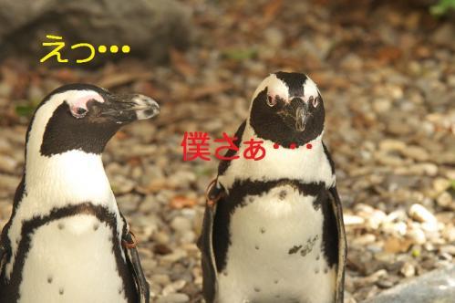 020_20111024220116.jpg