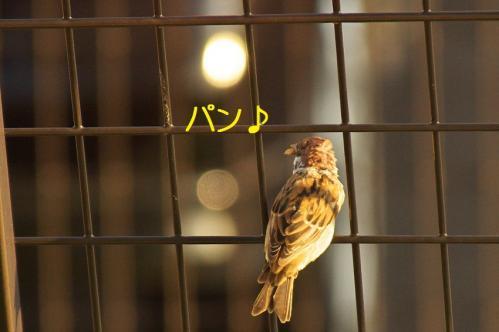 020_20111027194527.jpg