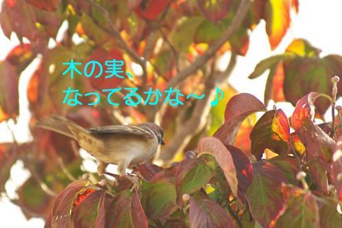 020_20111031213609.jpg