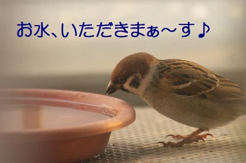 020_20111228225444.jpg
