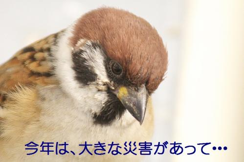 020_20111230192618.jpg