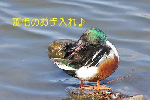 020_20120125231736.jpg