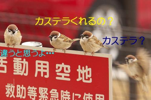 020_20120212185509.jpg