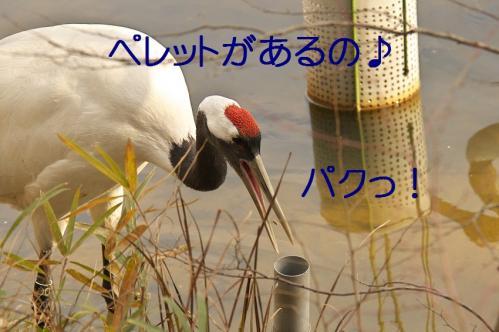 020_20120214222035.jpg