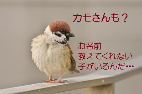 020_20120228213538.jpg