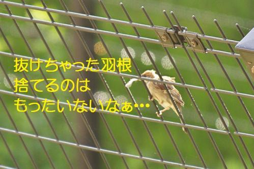 025_20111019222127.jpg