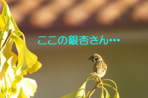 030_20101130191351.jpg