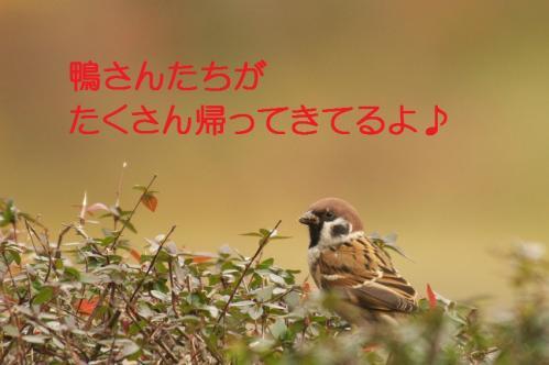 030_20101210214204.jpg